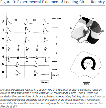 Experimental Exidence of Leading Circle Reentry