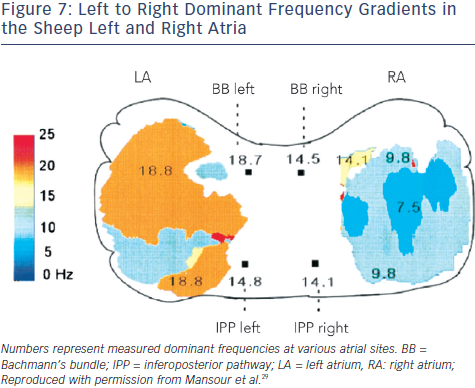 Left to Right Dominant Frequency Gradients in the Sheep Left and Right Atria