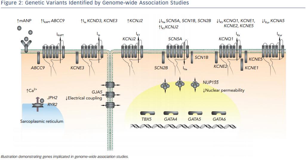 Genetic Variants Identified by Genome-wide Association Studies