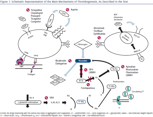 Schematic Representation of the Main Mechanisms of Thrombogenesis