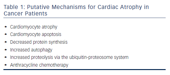 Table 1: Putative Mechanisms for Cardiac Atrophy in Cancer Patients