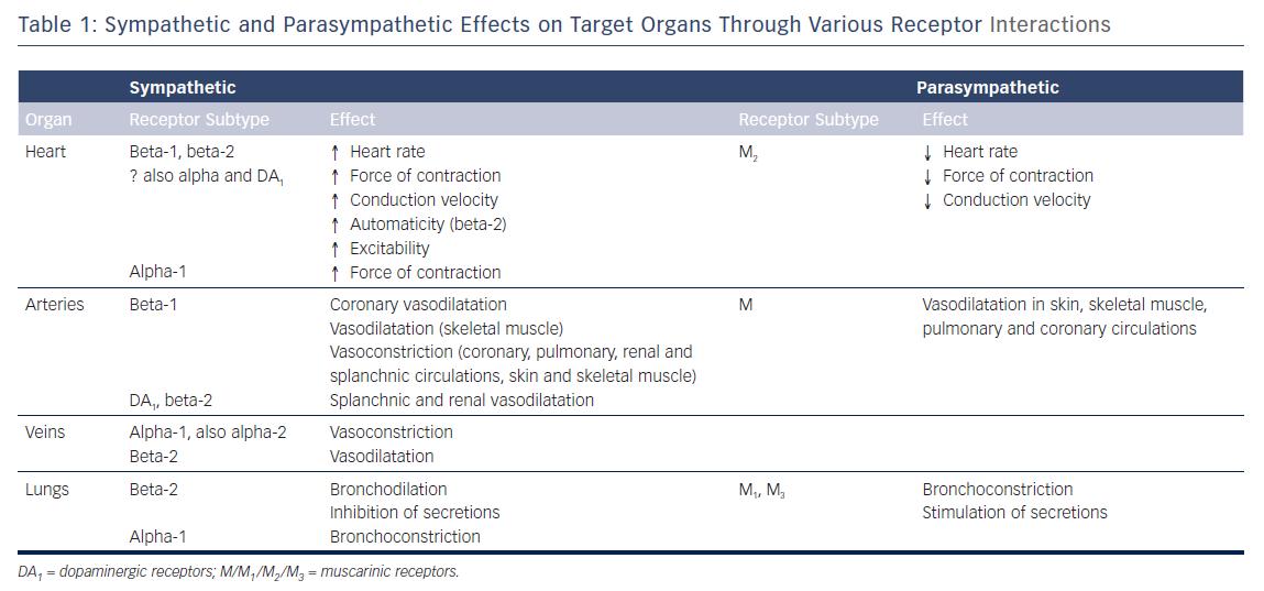 Sympathetic & Parasympathetic Effects